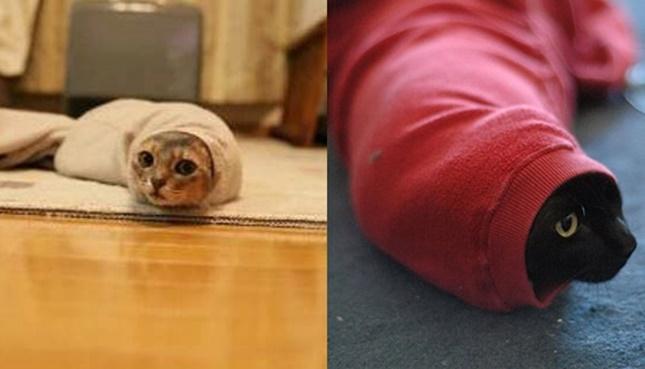 ツチノコのようなイモムシのような猫たち