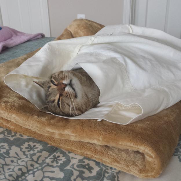 ウットリ顔の猫。