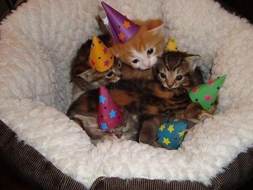 子猫パーティー!!
