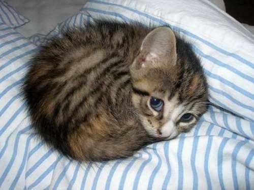 守ってあげたくなる子猫。