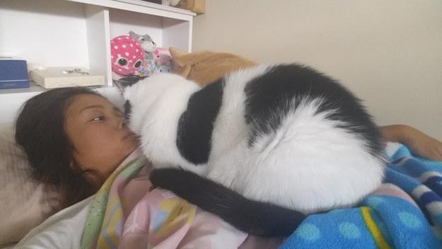 とにかく近い猫。