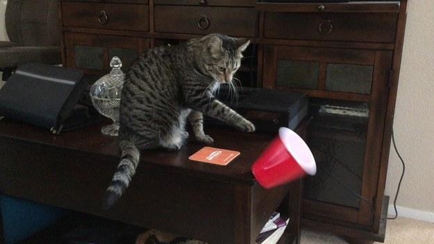 物を落とす猫。