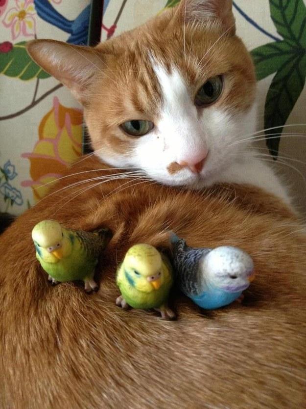 インコに侵略される猫。