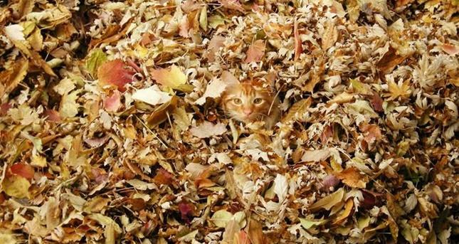秋の紅葉と猫。