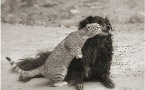 甘えまくりの猫。