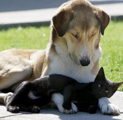 犬の腕枕が最高!