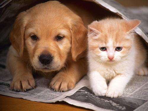 ポーズも一緒の猫と犬。
