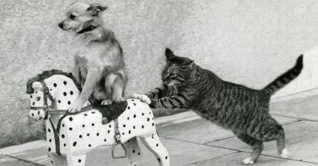 仲良しな猫と犬のまとめ