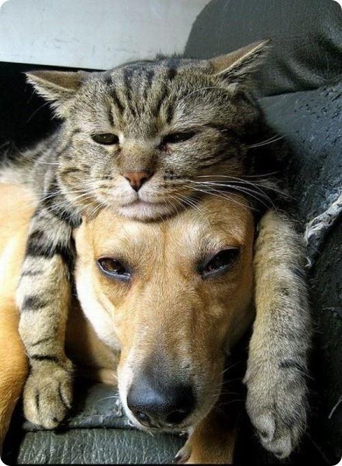 猫と犬の一体感は凄い!