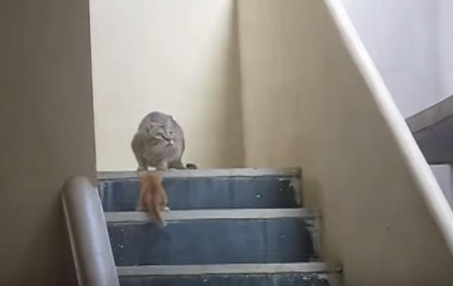 何かに気づく母猫。