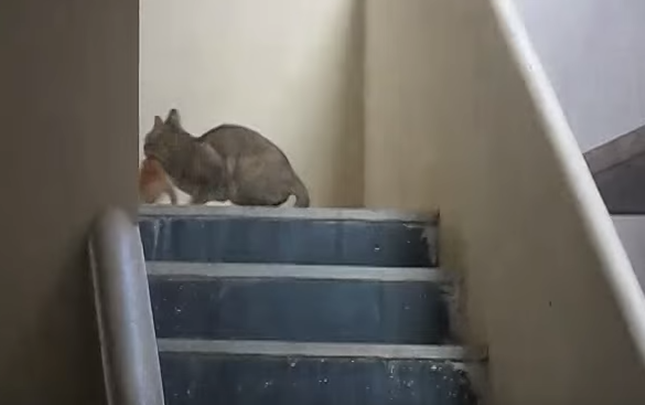 急いで子猫を咥え・・・