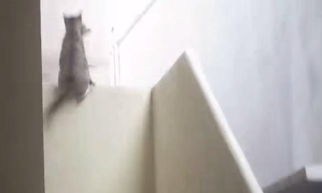 壁を登り・・・