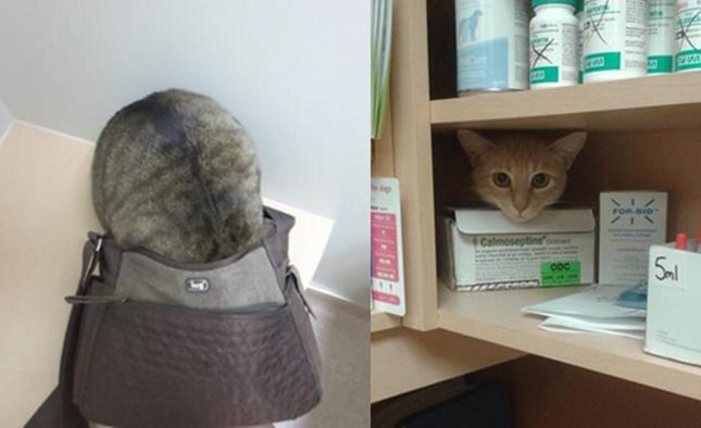 動物病院を嫌がる猫達。