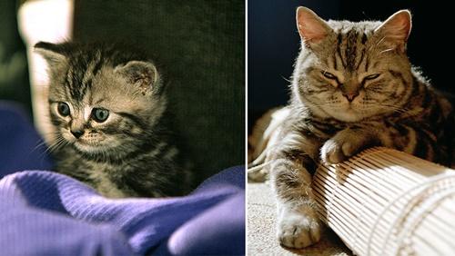 子猫からBOSSに!