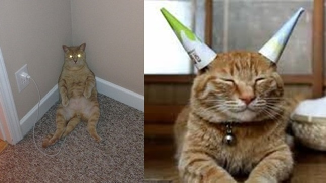 充電中の猫。