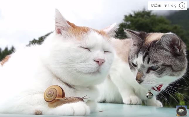 手にカタツムリが乗っても平気な猫。