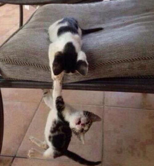 一生懸命助ける猫。