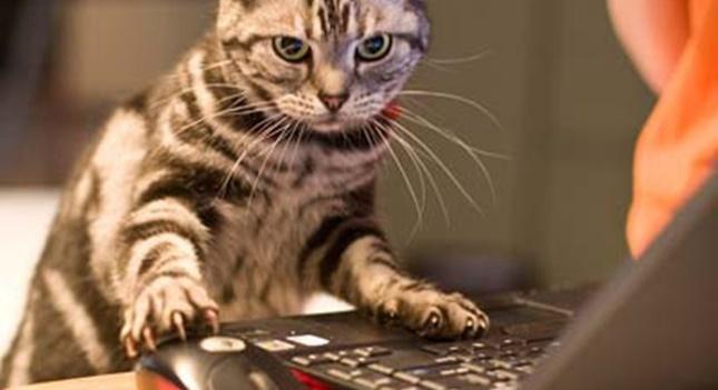 仕事が出来る猫。