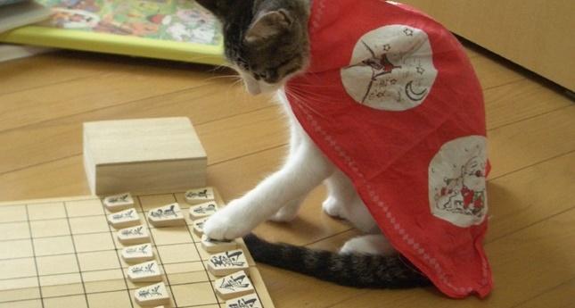 勝つ気満々の猫!