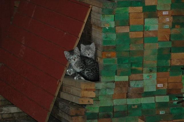 猫の隠れ家。