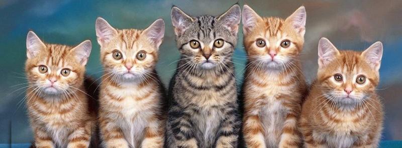 猫戦隊ゴレンニャー。