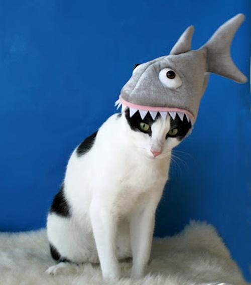 サメに食べられてる猫(帽子)