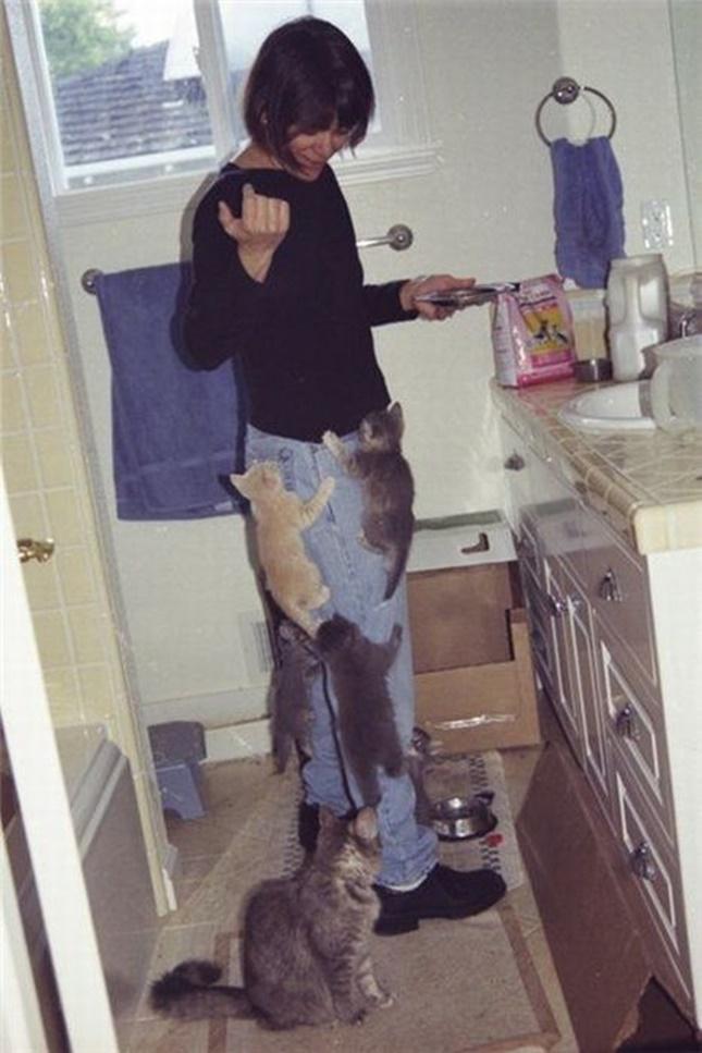 ご飯を催促する子猫軍団。