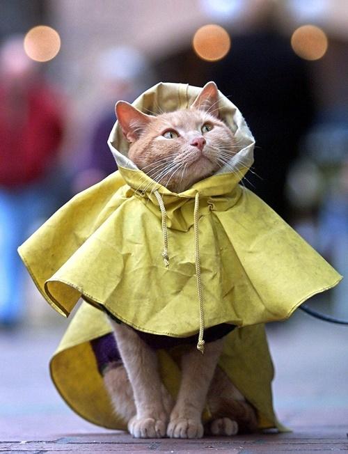 雨ガッパ猫。