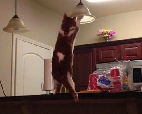 電球をかえる猫!?