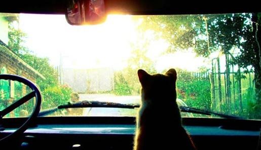 どこにいくのか?ワクワクドキドキな猫。