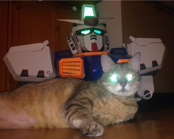 ガンダムと猫も一緒に起動。