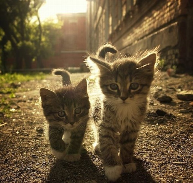 美しい子猫の兄弟。