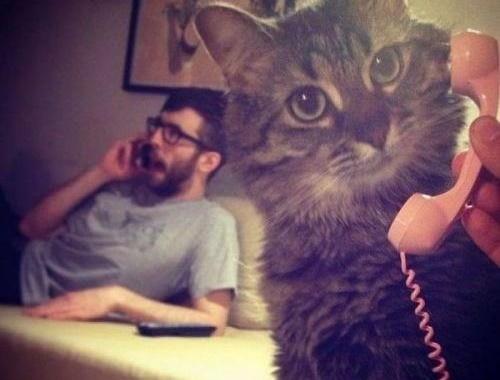 電話に出る猫。