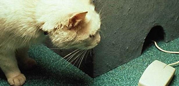 マウス?を見つめる猫。