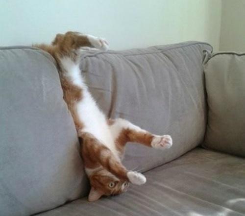 ソファーで逆立ちでくつろぐ猫。