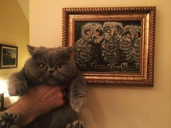 フクロウの絵にソックリな猫。