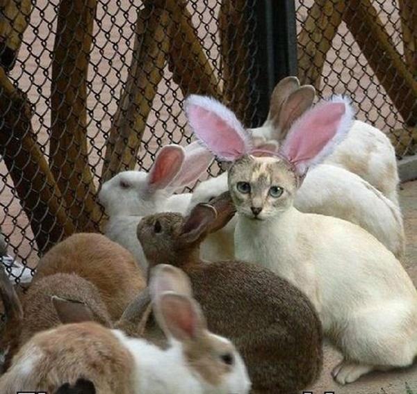 うさぎの群れにひそむ猫。