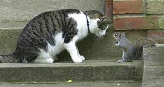 猫とリスのこんにちわ。