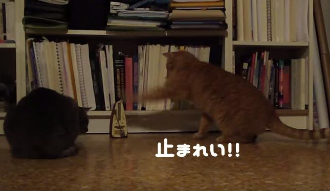 猫パンチを繰り出すもピクピク。