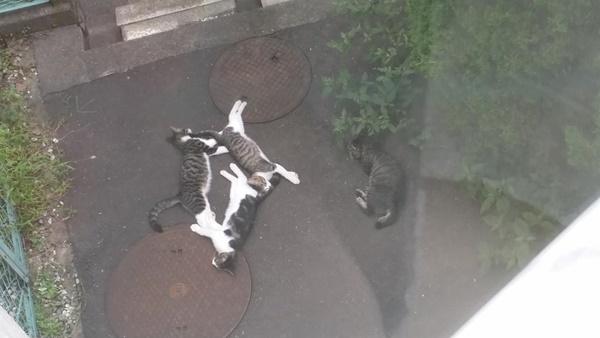 猫のたまり場。