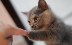子猫との小さな握手。