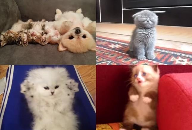 可愛い子猫動画10選
