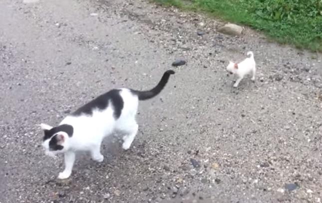 猫さんまって~!