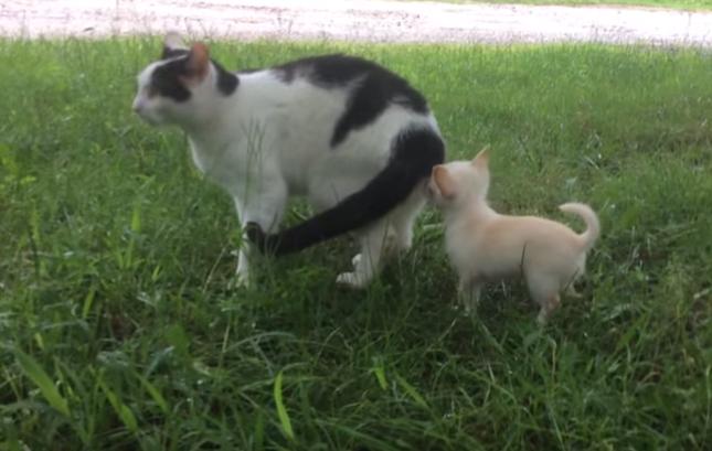 猫さんの匂い!