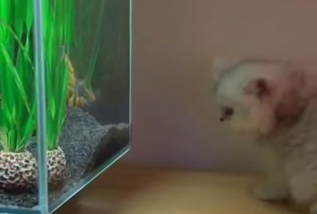 お魚さん発見!