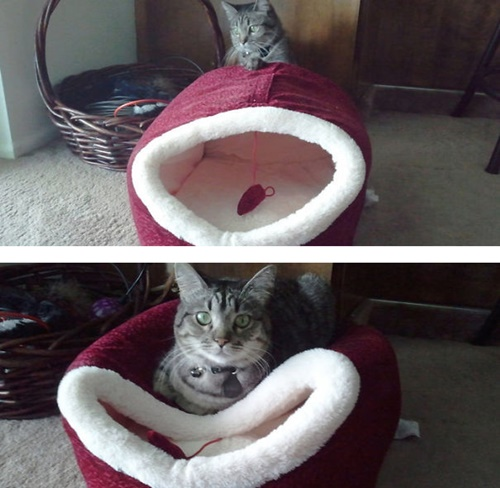 せっかくのベッドが座布団に。