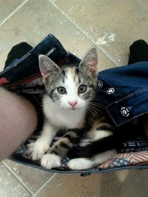 トイレに潜む邪魔猫。