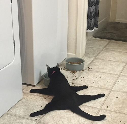 不思議すぎる猫の行動。