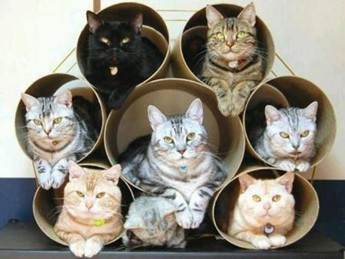 プロ級ドカン型猫マンション。