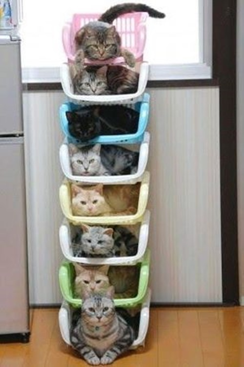 タワー型猫マンション。